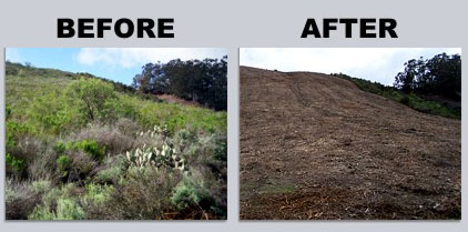 brush-mowing-before-after